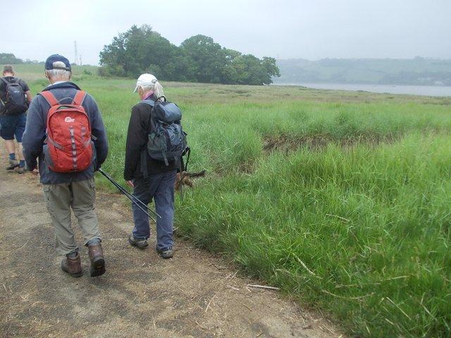 Lane by a tidal marsh