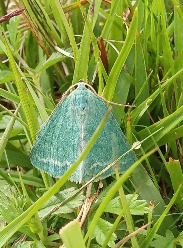 Grass Emerald