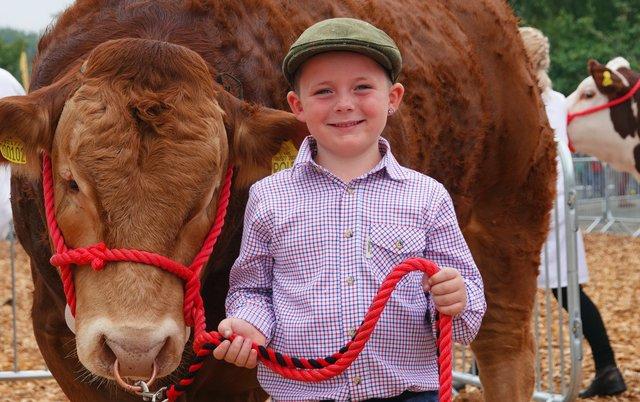 Boy and bull