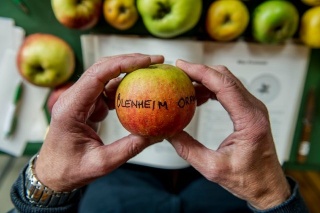 Enjoy seasonal apple displays, identification, tasting, tips and talks, children's activities and trails, as well as family entertainment, live music and a bar.