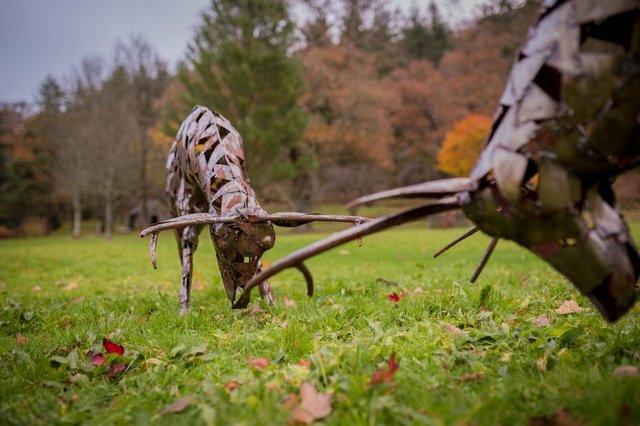 RHS Rosemoor Winter Sculpture Exhibition Roger Davies - Rutting Stags.