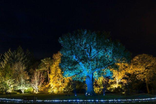 Winter illuminations at RHS Garden Rosemoor