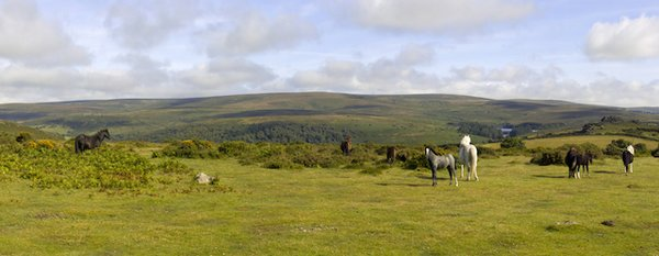 A DArtmoor Pony.jpg