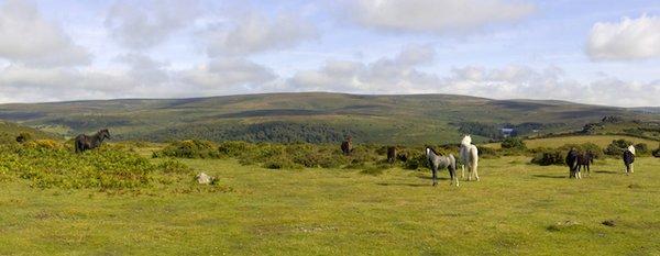 A DArtmoor Pony.jpg